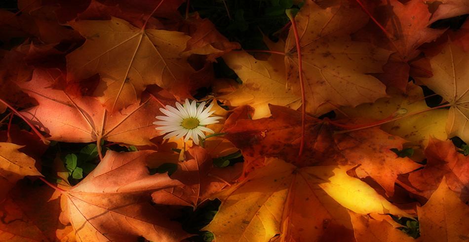 sonbahar-ekinoksu-gun-ve-gecenin-dugunu